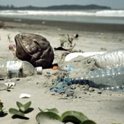 European Parliament says biodegradable plastics will not solve plastic pollution