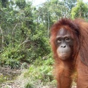 EIA's newest recruit reflects on the state of Indonesian forests ahead of World Environment Day