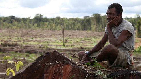 Palm oil deforestation in Papua