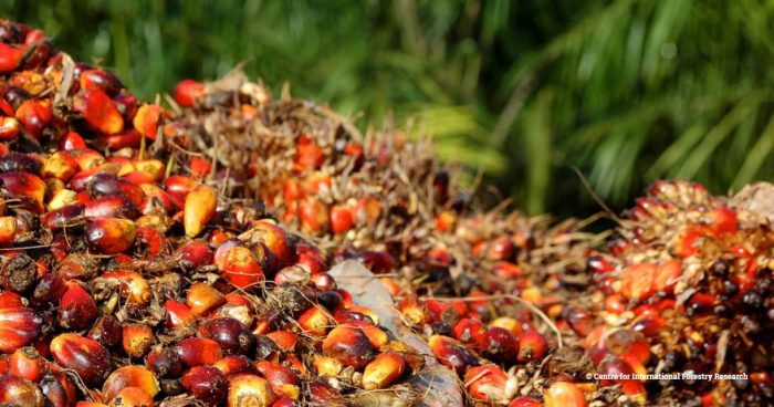 A pile of Palm oil fruits