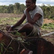 West Papua's big palm oil plantations rip-off