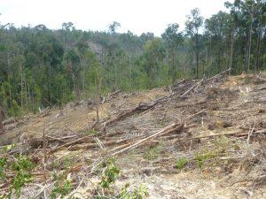 Partially logged hillside