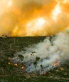 plantation fire
