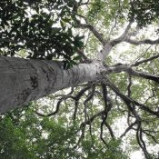 Forests Week: The tireless fight for forest reform in the face of violence and corruption