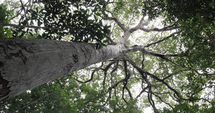 rainforest indonesia