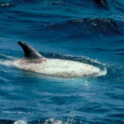 Amazon confirms policy to ban whale & dolphin products