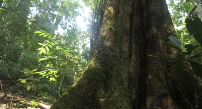 slide_forests