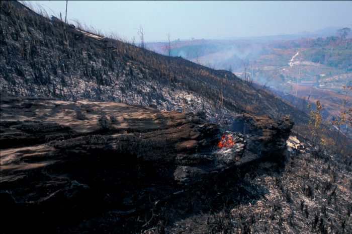 A view of a burnt forest