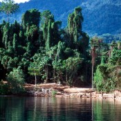 NGOs urge EU to strengthen action against illegal logging