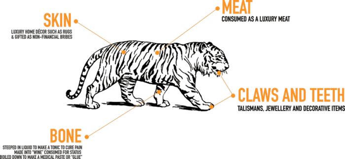 tiger campaign graph parts