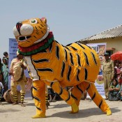 Bengal tigers roadshow tours India's Sundarban villages