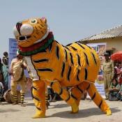 Bengal tigers roadshow tours India's Sundarban villages