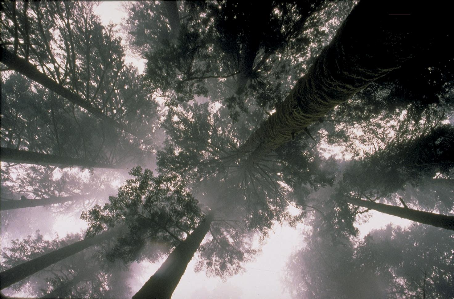Trees. Credit EIA