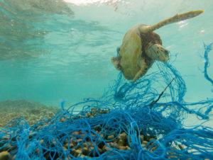 A turtle trapped in ghost gear fishing net