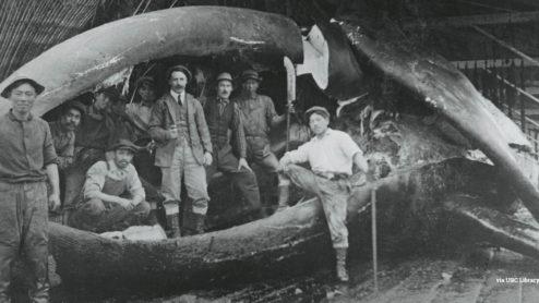 Whaling historic photograph