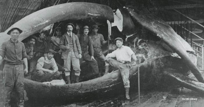 uk historic whaling