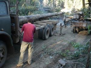Undercover investigation into illegal logging in Laos, 2011 (c) EIA