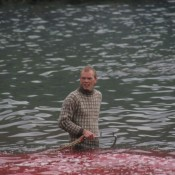 NGO coalition urges Faroe Islands PM to end whaling