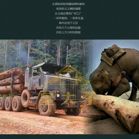 https://eia-international.org/wp-content/uploads/website-page-timber.jpg