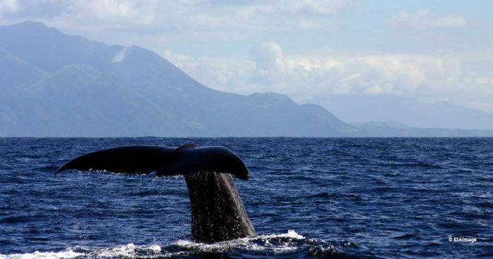 whale, NZ