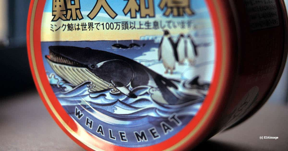 whale meat, japan
