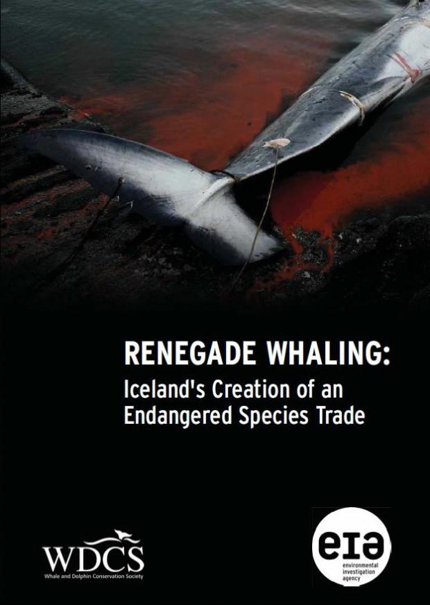 Renegade Whaling. Image Credit Jonas Freydal