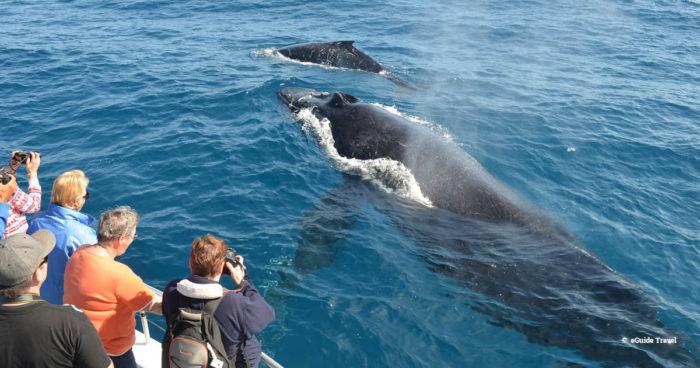 whale watching australia
