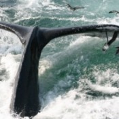 UK could be forced to pay half a million for commercial whaling