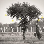 Season's greetings and thanks for all your support this year